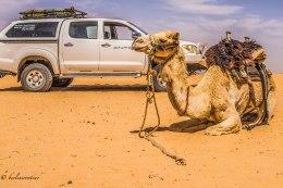 Wadi Rum_317