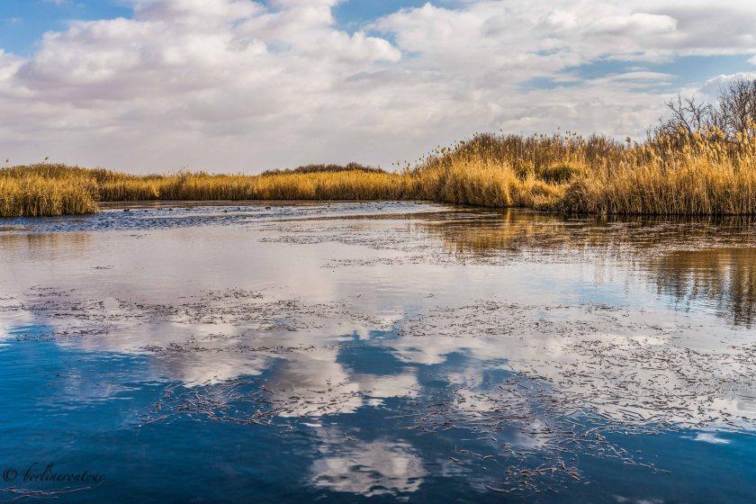 Wetland Reserve Al Azraq