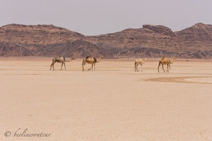 Wadi Rum__046